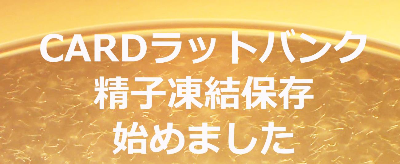 ラット精子凍結保存.jpg